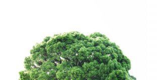 Árvore crescendo protegida por mãos humanas no conceito de sustentabilidade.