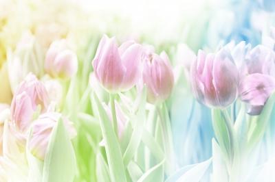 Flores representam uma composição olfativa de perfume de cosméticos.