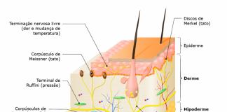 Estrutura anatômica da pele e sistema tegumentar.