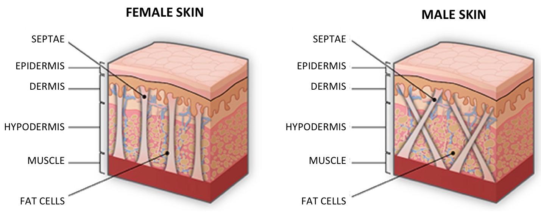 Diferenças fisiológicas entre a pele do homem e a pele da mulher.