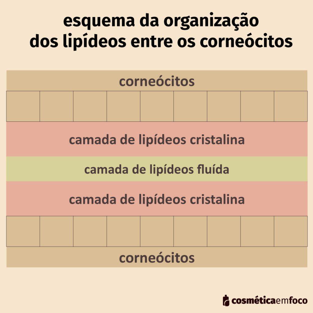 lamelas lipídicas na pele normal