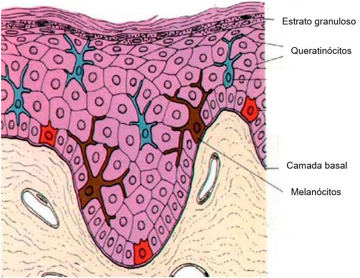 despigmentação Tratamentos estéticos para despigmentação da pele POST20181031 queratinocitos pigmentacao