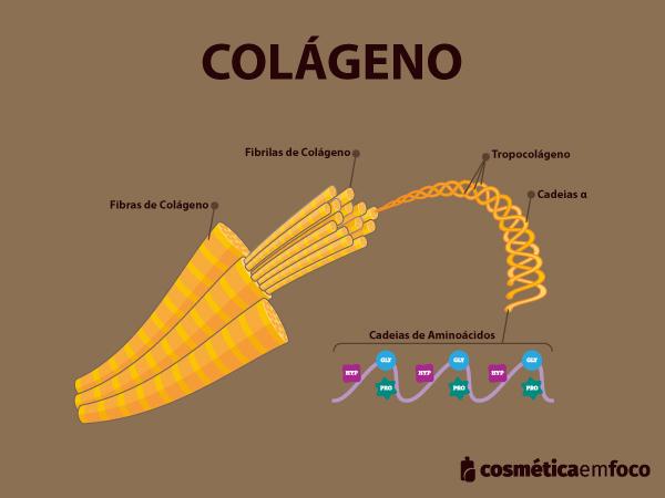 colágeno O que é colágeno e qual sua função 20200701 Estrutura do Col  geno 2