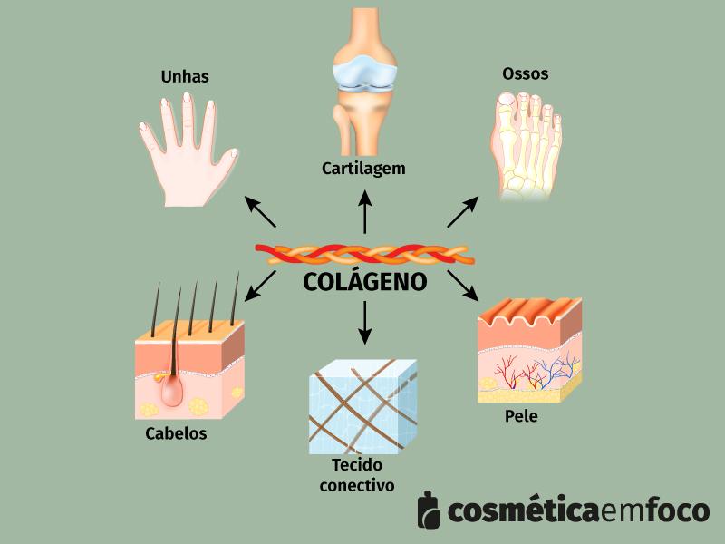 tecidos do corpo onde tem colágeno